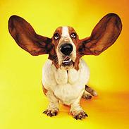 listen hound resized 600
