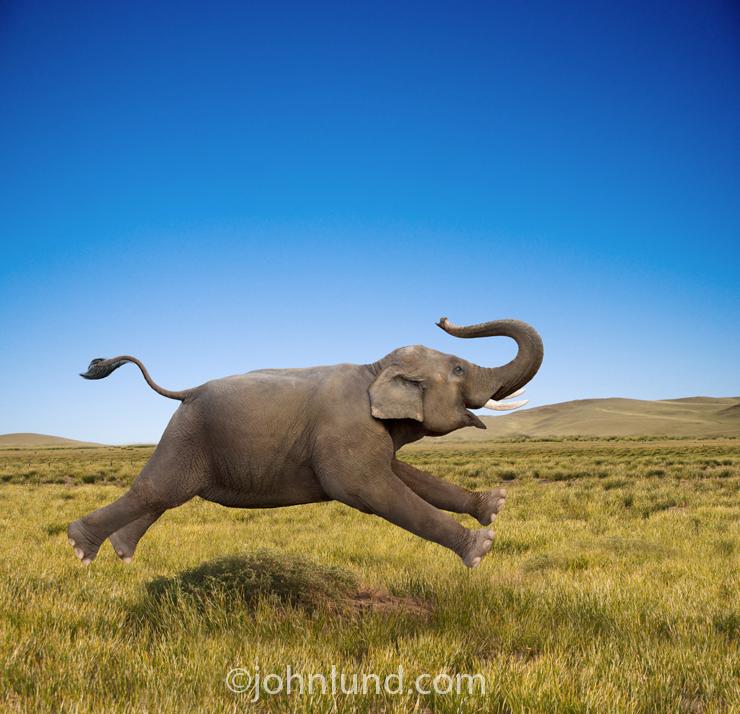 Effective Branding Makes Your Customers Remember Like Elephants