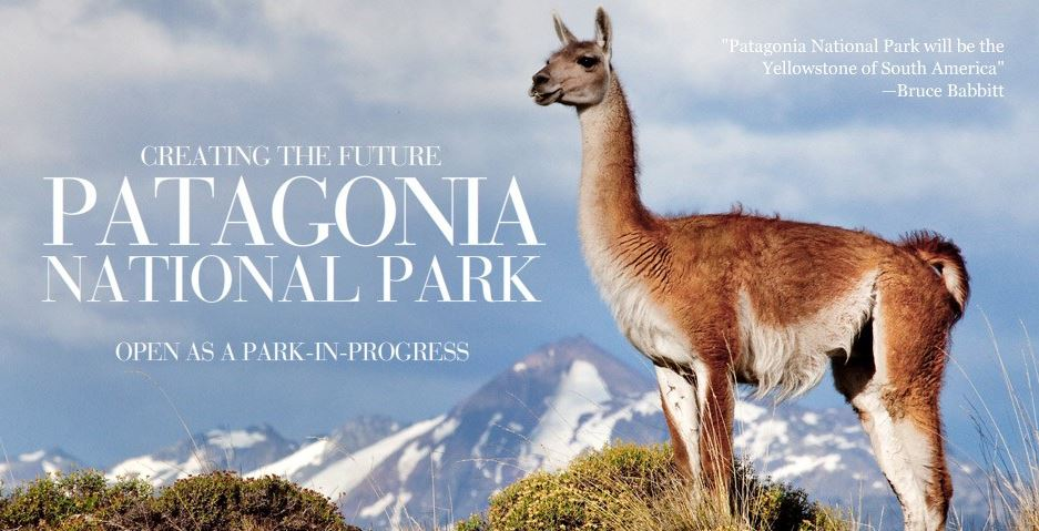 Patagonia's marketing as a key to owning and honing your brand identity