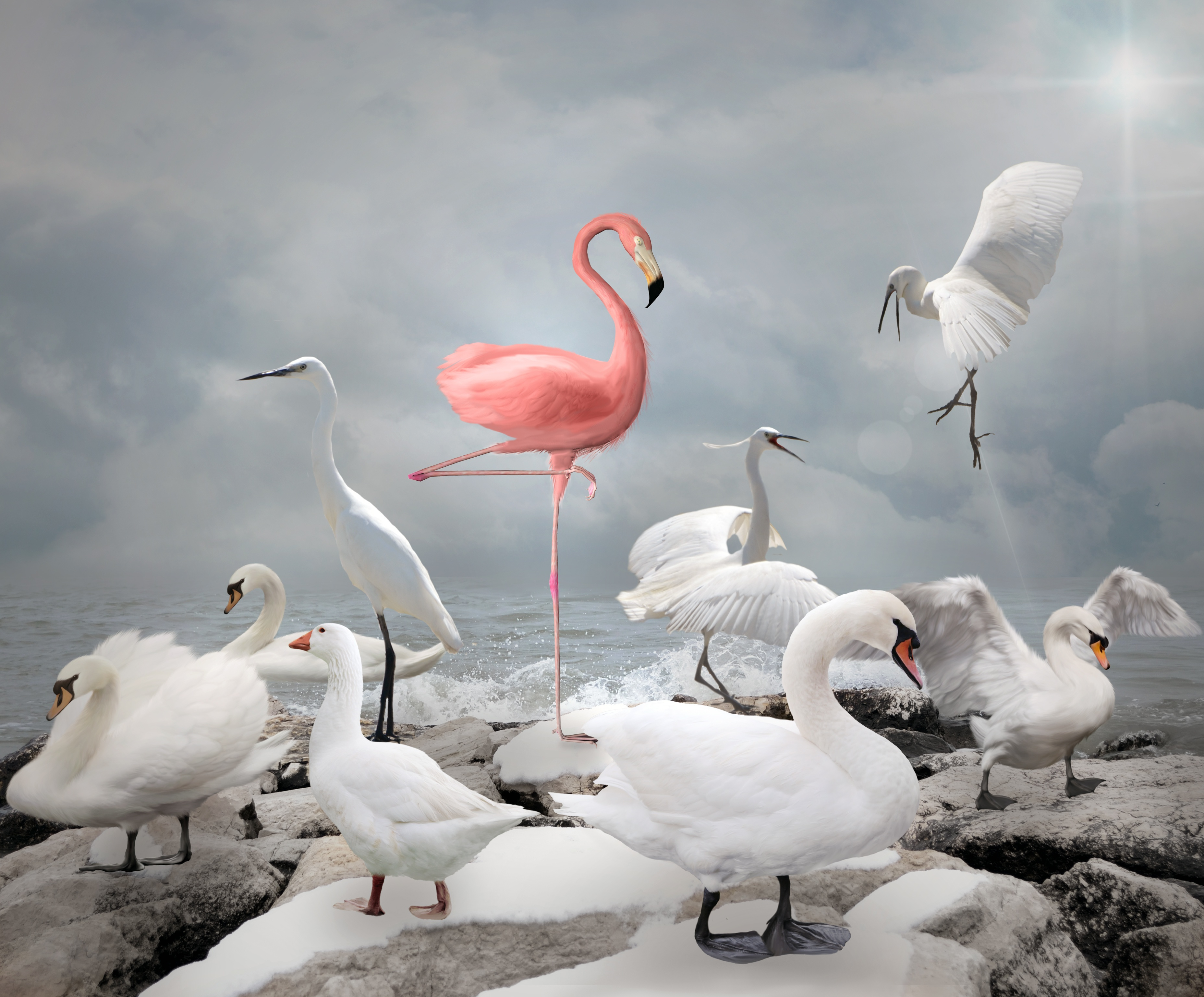 Stand out from your competition like a flamingo among seagulls, with a bold brand promise.