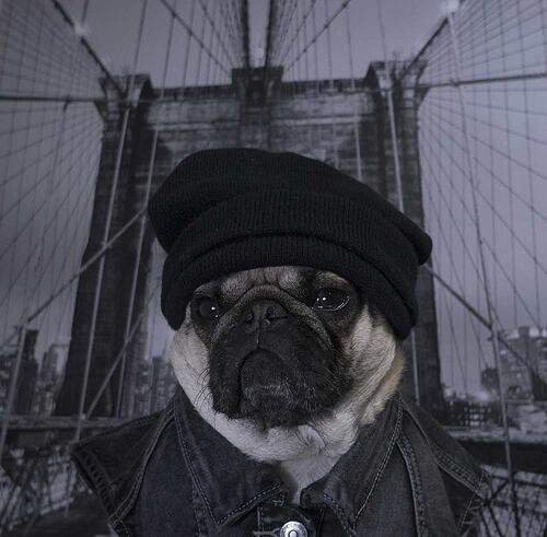 Pug-on-bridge