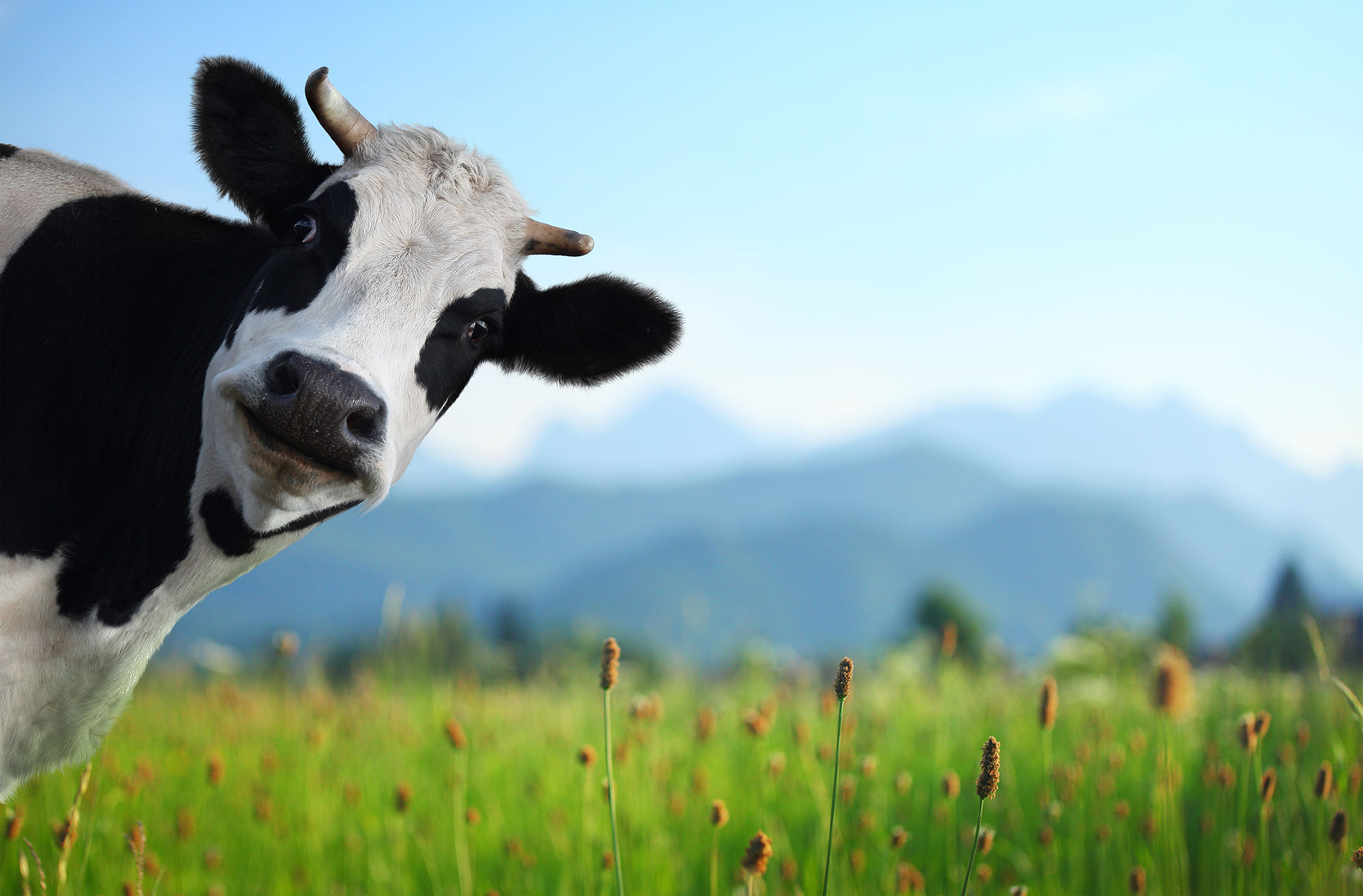 Betty Has 2 Cows: 5 Smarter Ways To Market Your Business